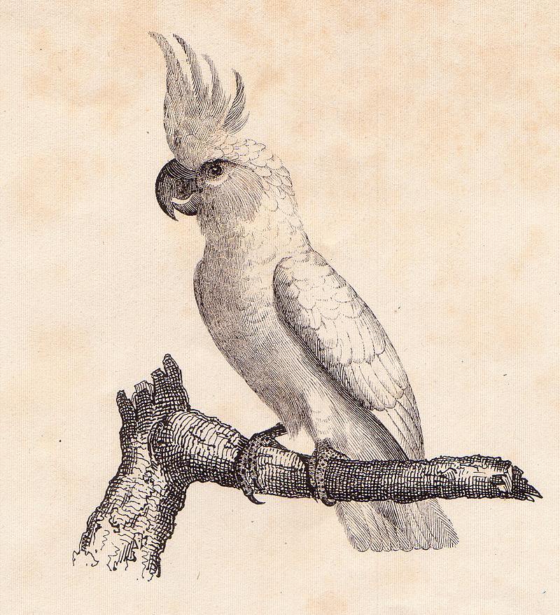 bird12