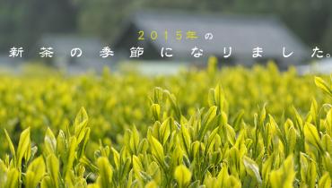 2015年の新茶の季節になりました。